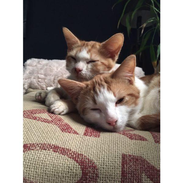 Oscar and Felix, the Odd Couple